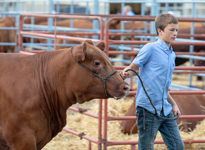 2019 Kansas Junior Livestock Show Photo - Click Here to See